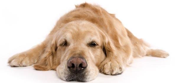 Hallidays Point Pet Friendly Accommodation